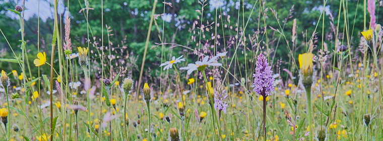 Purple and yellow wildflowers in a meadow