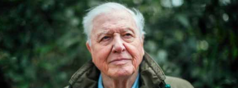 Sir David Attenborough stood in front of a large tree